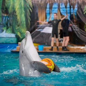 Дельфинарии, океанариумы Сестрорецка