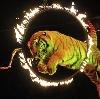 Цирки в Сестрорецке