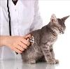 Ветеринарные клиники в Сестрорецке